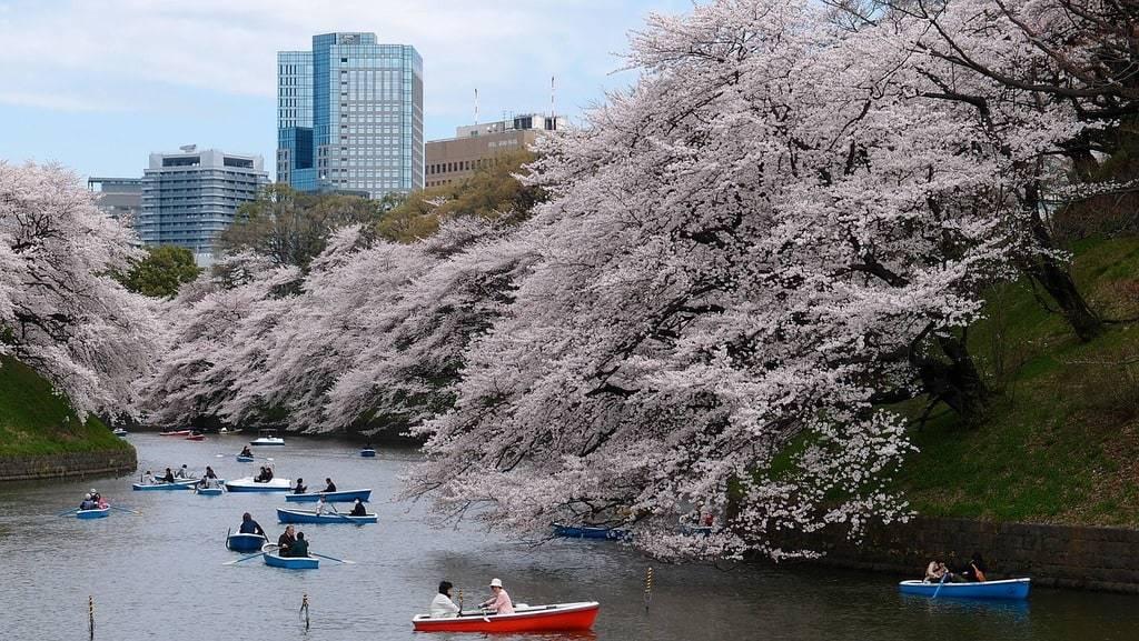 Quelle est la meilleure période pour visiter le Japon ?